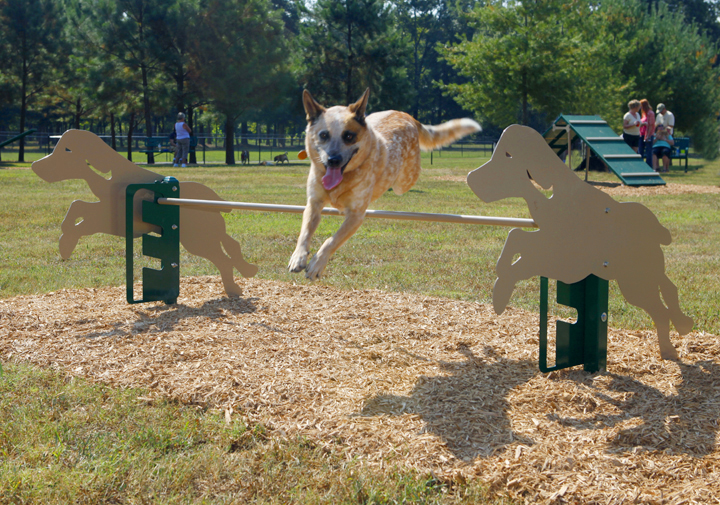 dog park-shephard jumping