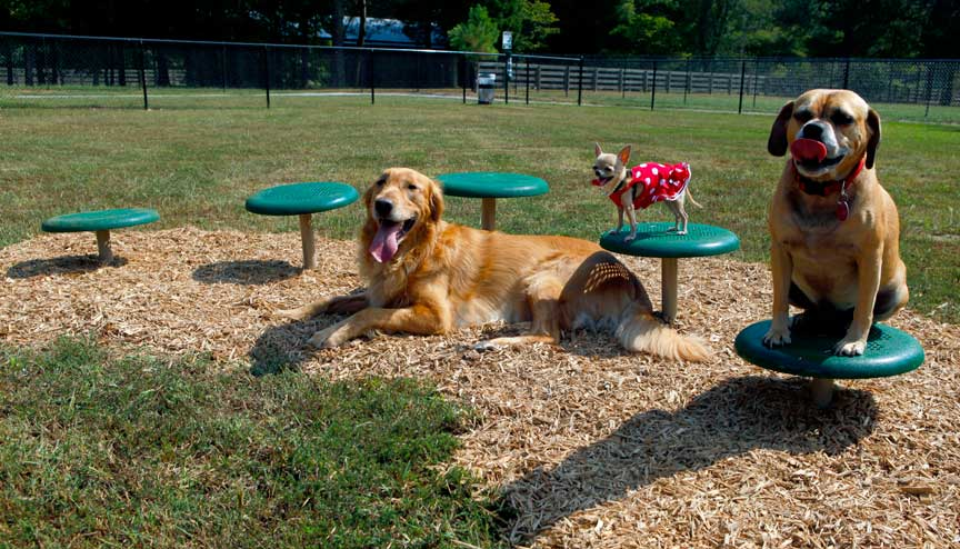 dog-park-Stepping-Paws_Natural-web (002)