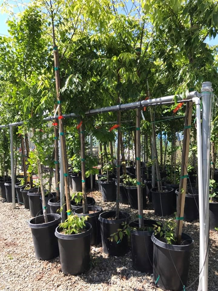 free tree workshop picture of 10 gallon trees