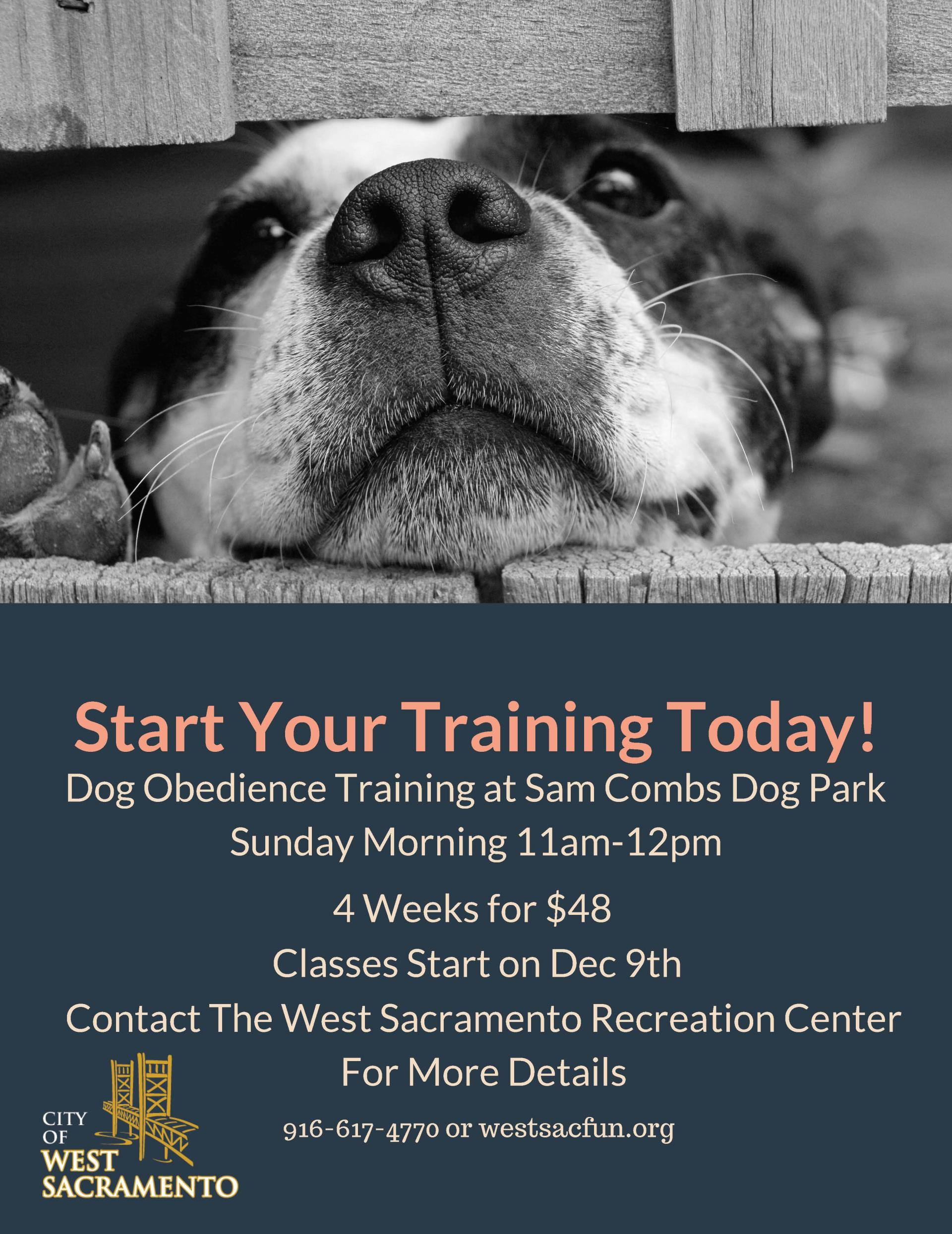 Dog Training Flyer