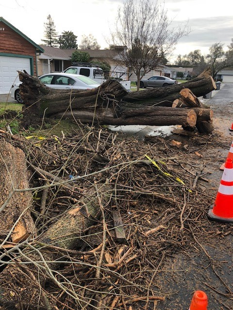 2019-1-7-storm-cleanup-trees-public works