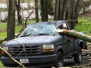 2019-1-7-storm-cleanup-tree on truck