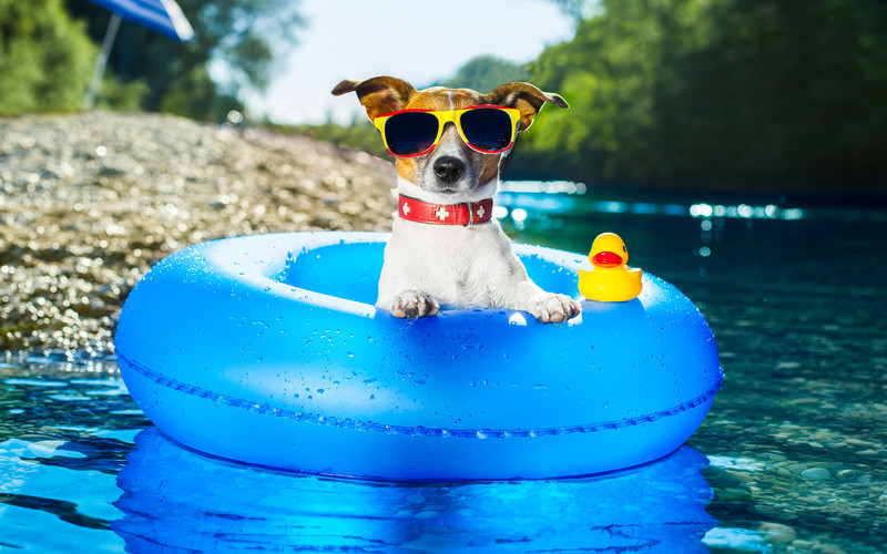 Image of a dog wearing glasses in a floaty on a river